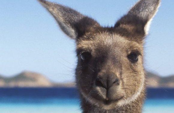 AUSTRALIA E FIJI